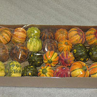 Thanksgiving Fall Gourd Set - $39 Retail